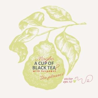 Ilustração de ramo de bergamota.