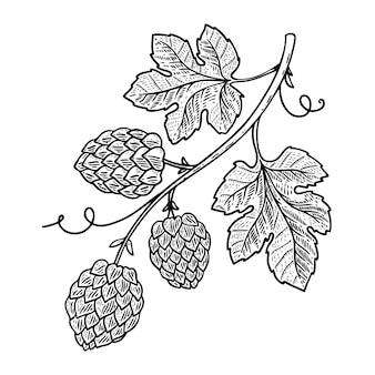 Ilustração de ramo de lúpulo em fundo branco. elemento para o logotipo, etiqueta, emblema, sinal. imagem