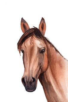 Ilustração de retrato de cavalo pintado à mão em aquarela