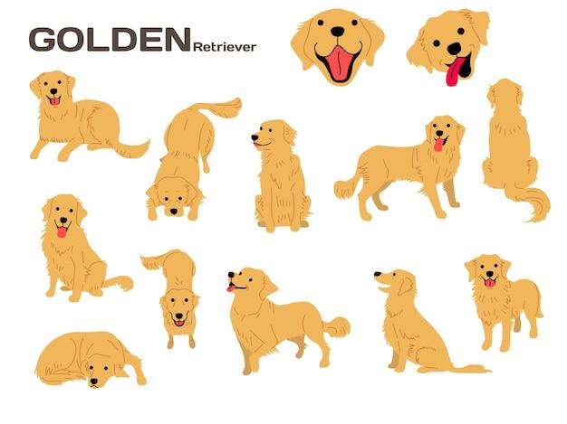Ilustração de retriever dourado, poses de cão, raça de cão