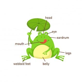 Ilustração, de, sapo, vocabulário, parte, de, body.vector
