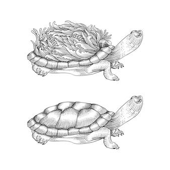 Ilustração de tartaruga desenhada de mão