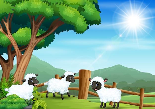 Ilustração de três ovelhas brincando na fazenda