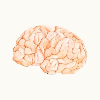 Ilustração, de, um, cérebro humano