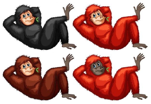 Ilustração de um conjunto de orangotangos