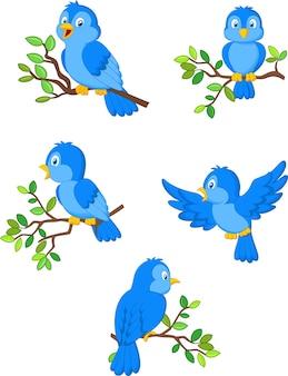 Ilustração de um conjunto de pássaros bonitos dos desenhos animados