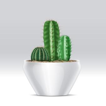 Ilustração de um vaso cheio de mistura de plantas suculentas de cactos em fundo branco