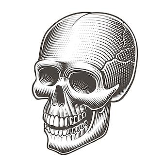 Ilustração de uma caveira no estilo de tatto em branco