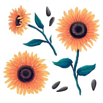 Ilustração de uma flor de girassol em três ângulos, folhas e talo de um girassol e sementes de girassol