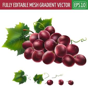 Ilustração de uvas vermelhas em branco