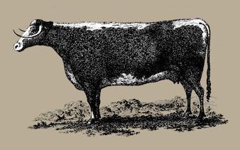 Ilustração de vaca vintage