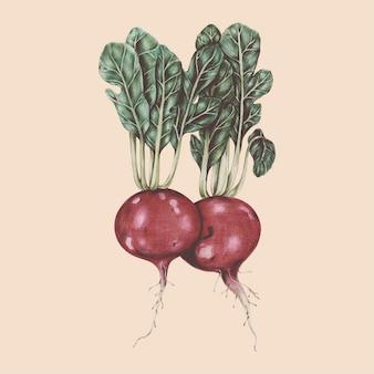 Ilustração, de, vegetal, aquarela, estilo