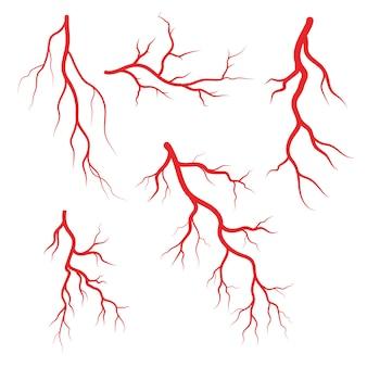 Ilustração de veias e artérias humanas
