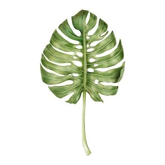 Ilustração, de, verde, folha, aquarela, estilo