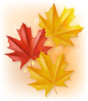 Ilustração de vista superior de folhas de outono