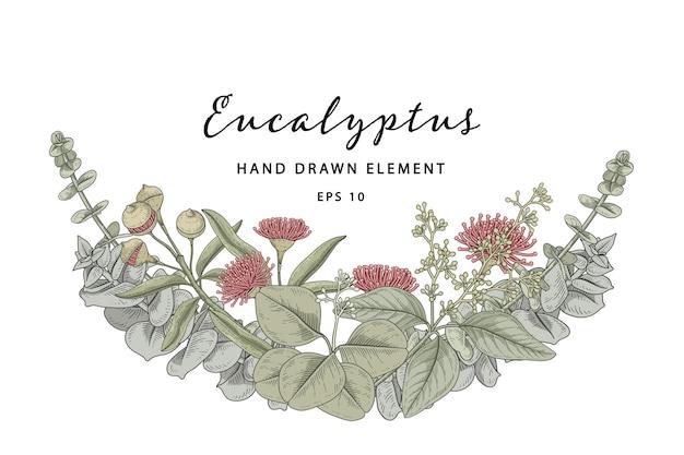 Ilustração desenhada à mão de meia coroa de flores de eucalipto