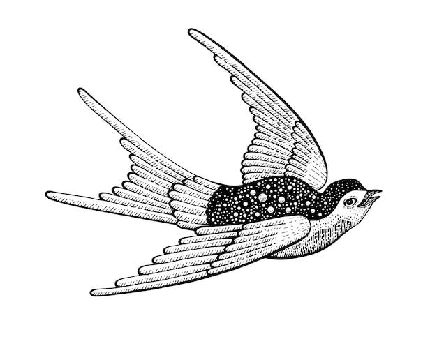 Ilustração desenhada à mão de pássaro andorinha