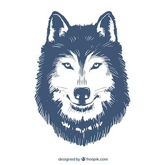 Ilustração desenhada mão do lobo