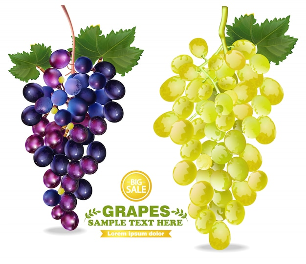 Ilustração detalhada de uvas