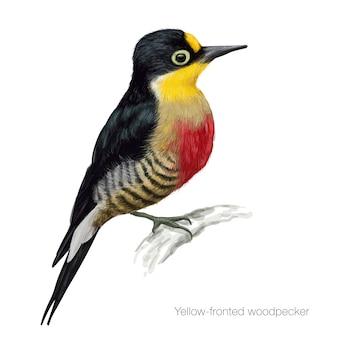 Ilustração detalhada do pica-pau com fachada amarela