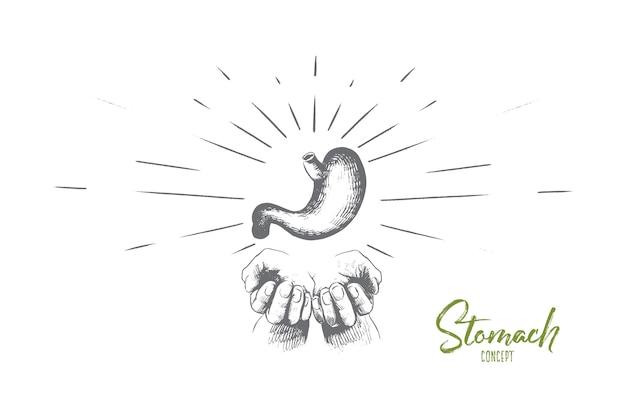 Ilustração do conceito de estômago