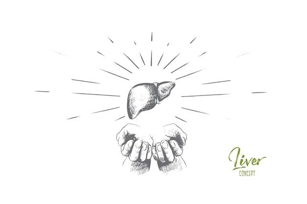 Ilustração do conceito de fígado