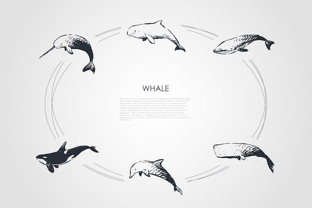 Ilustração do conjunto de conceito de baleia
