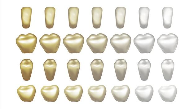 Ilustração do conjunto de dentes