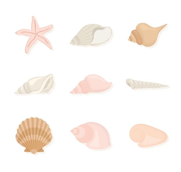 Ilustração do conjunto de elementos de moluscos