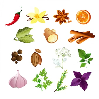 Ilustração do conjunto de ervas e especiarias em estilo simples.