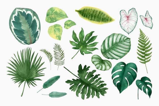 Ilustração do conjunto de folhas tropicais em aquarela