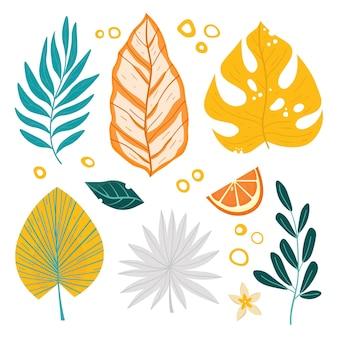 Ilustração do conjunto de folhas tropicais