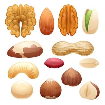 Ilustração do conjunto de nozes.