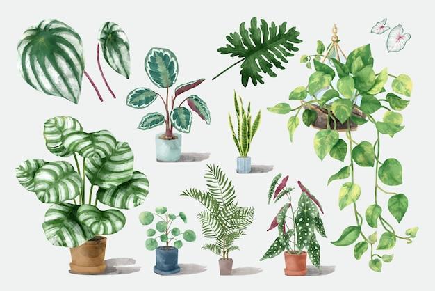 Ilustração do conjunto de plantas tropicais em aquarela