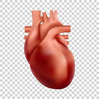 Ilustração do coração humano d anatomia realista do coração