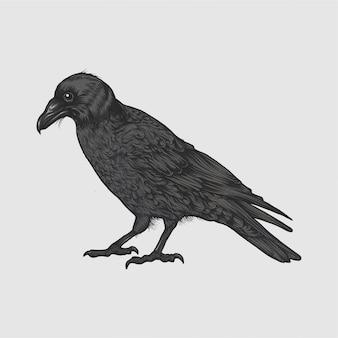 Ilustração do corvo