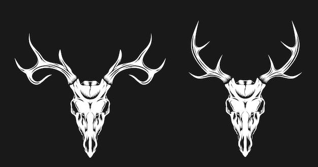 Ilustração do crânio de veado com 2 chifres diferentes
