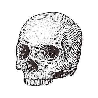 Ilustração do crânio humano