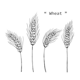 Ilustração do desenho do trigo à linha arte tirada mão.