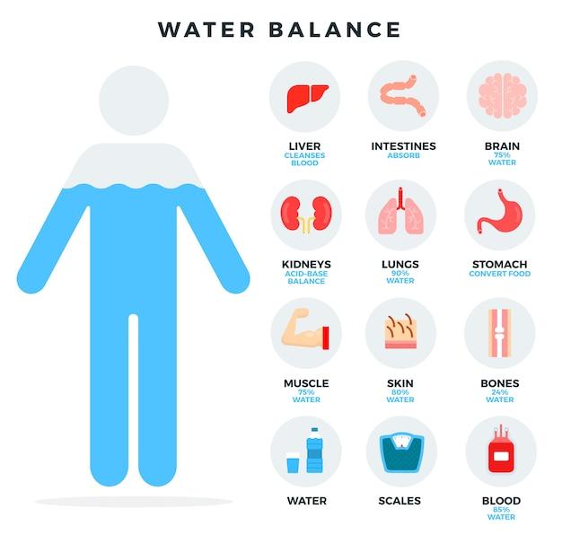 Ilustração do equilíbrio humano da água