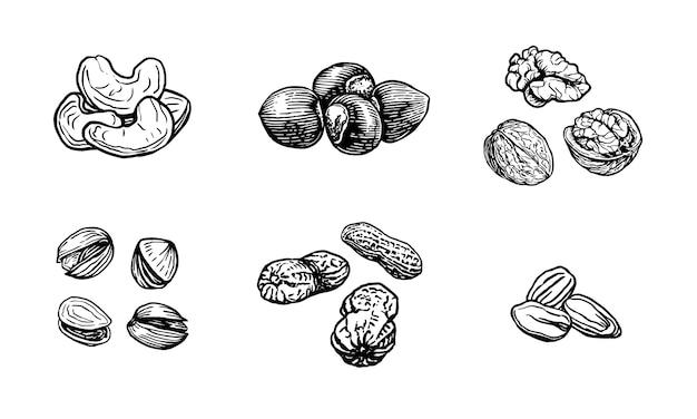 Ilustração do esboço da porca. estilo de gravura nozes desenhadas à mão nozes, avelã, caju, amendoim, pistache