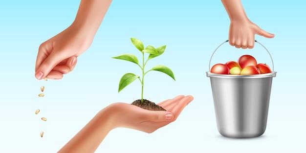 Ilustração do processo de cultivo de plantas