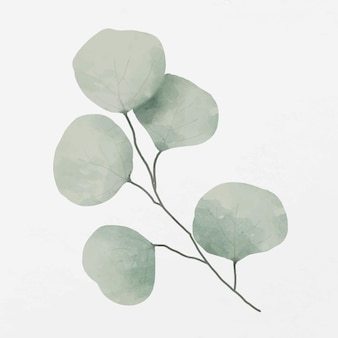 Ilustração do ramo de folhas verdes