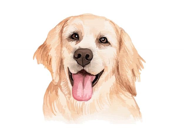 Ilustração do retrato do cão golden retriever pintada à mão em aquarela
