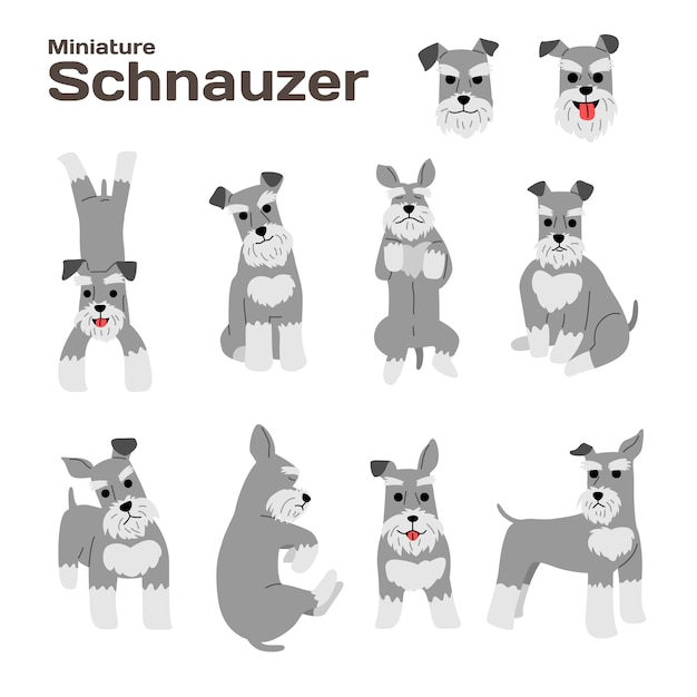 Ilustração do schnauzer diminuto, poses do cão, raça do cão