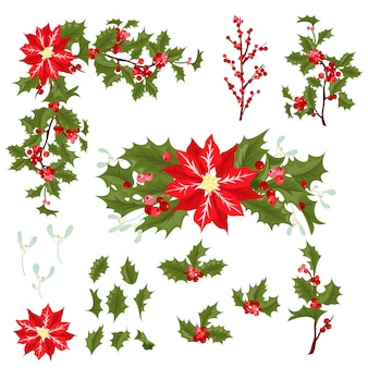 Ilustração do vetor da flor da baga do natal.