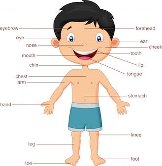 Ilustração do vocabulário parte do corpo