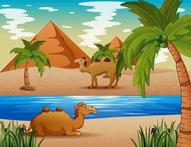 Ilustração dos desenhos animados de camelos vivendo no deserto