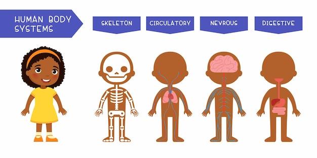 Ilustração educacional de sistemas do corpo humano para crianças