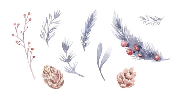 Ilustração em aquarela com frutas e cones. conjunto de ramos de inverno de pinheiros, abetos e arborvitae. coleção de herbário do bosque.